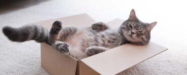 cute cat relaxing in a cardboard box